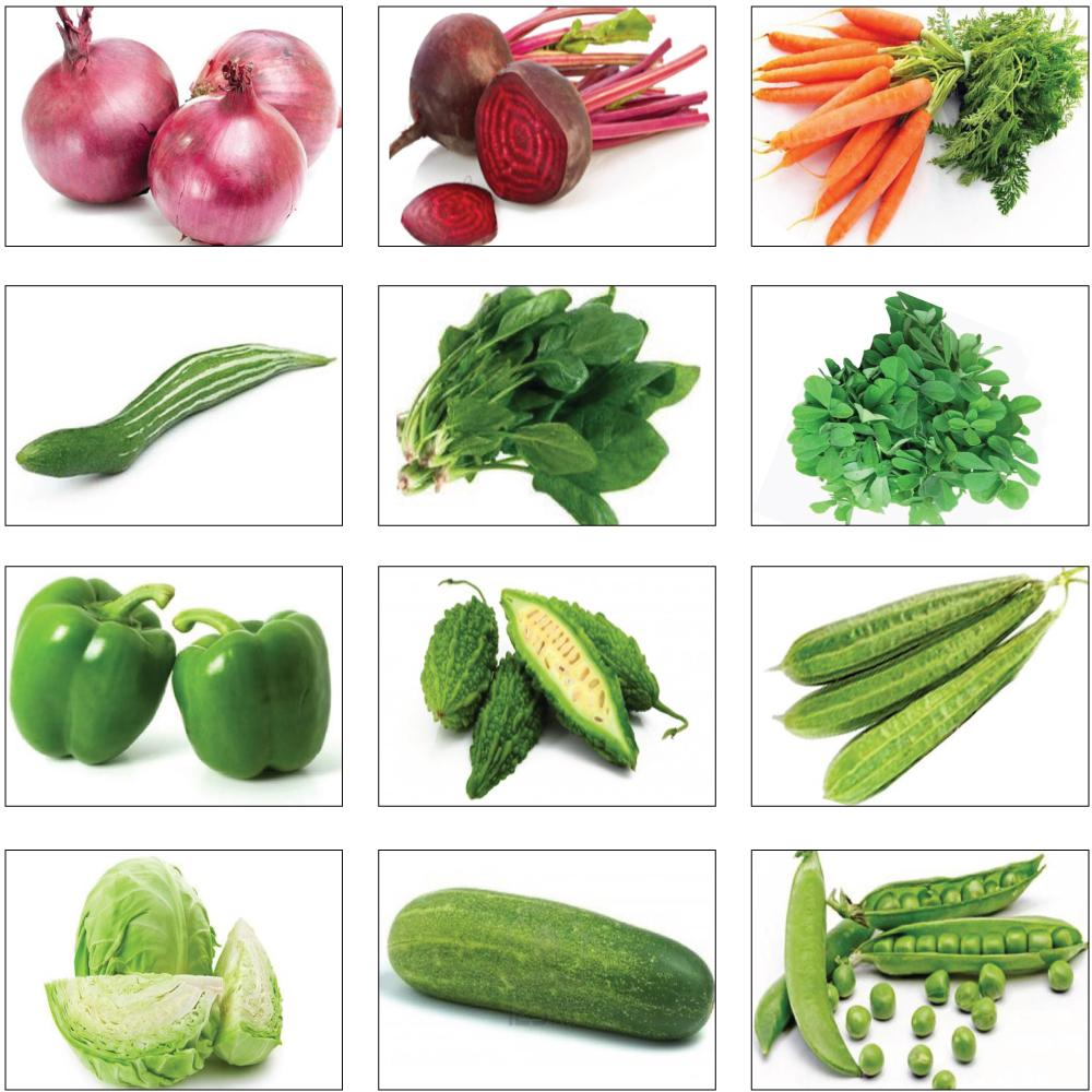 Seeds and Plants Sales in Oman | Pots and planters Equipment